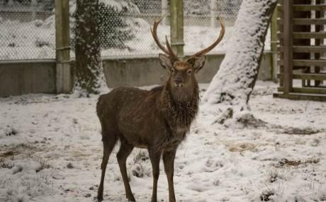 Лесной зоопарк в Беловежской пуще