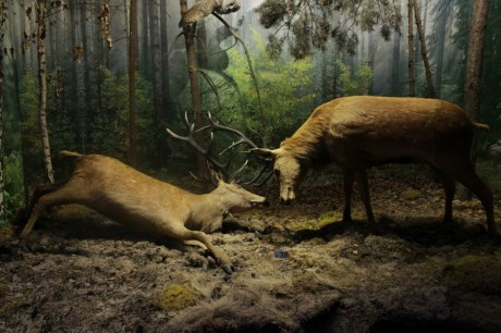 Музей природы  в Беловежской пуще