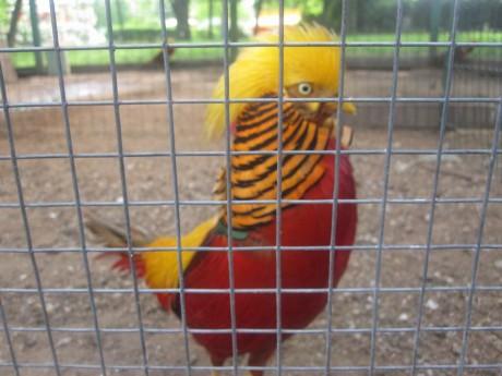 Уголок с экзотическими птицами BR Парк развлечений  Дримлэнд  DreamLand