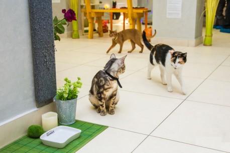 Музей кота   г. Минск  Беларусь