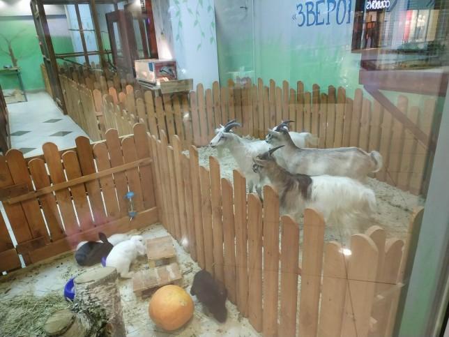 """Mini зоопарк """"Зверополис""""   г. Минск  Беларусь"""