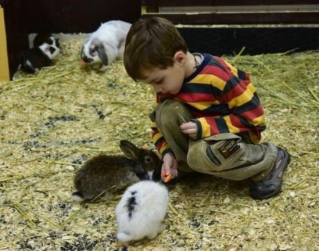 Контактный зоопарк  Страна Енотия   BR в торговом центре  Тивали   г. Минск  Беларусь