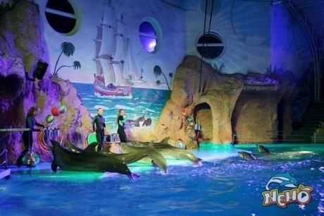 Романтическое ночное шоу в Дельфинарии  Немо