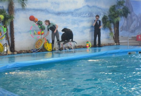 Дневное шоу в Дельфинарии  Немо