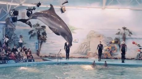Новогодние приключения  Маши и Миши  в дельфинарии  Немо