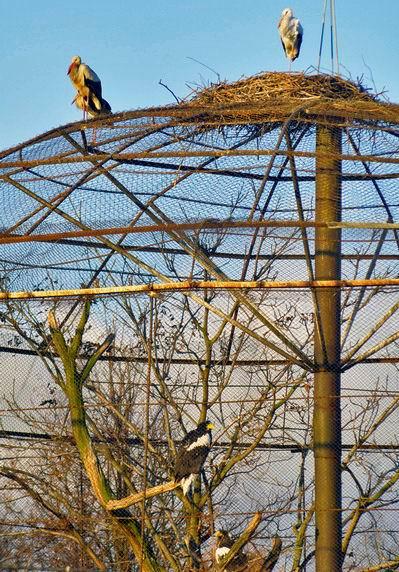 хищные птицы и аисты   BR  Минский зоопарк