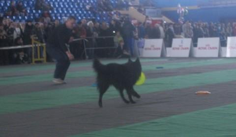 Догшоу 2014 - выставка собак и кошек в Минске  - Дворец Спорта - 1 2 февраля 2014