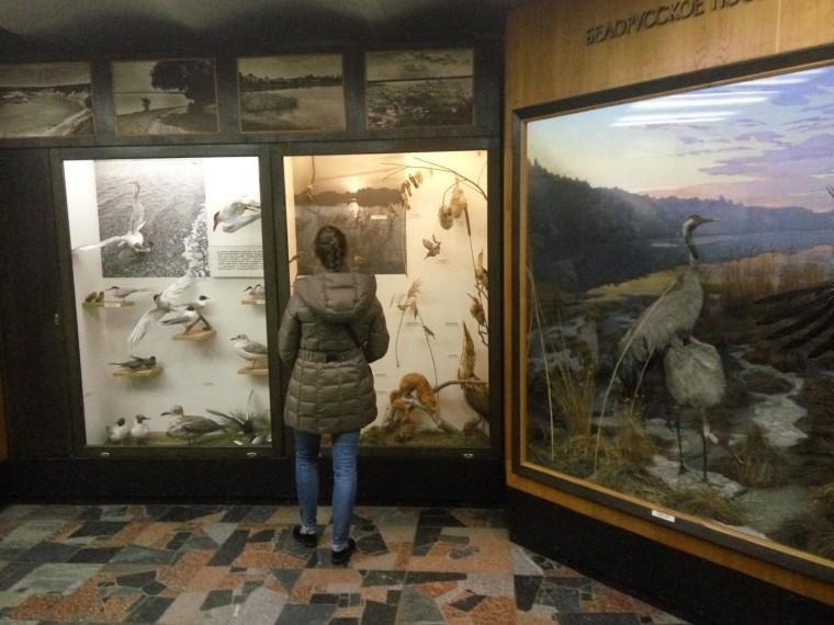 Птички и журавли  Музей природы и экологии   г. Минск  ул. Карла Маркса  12