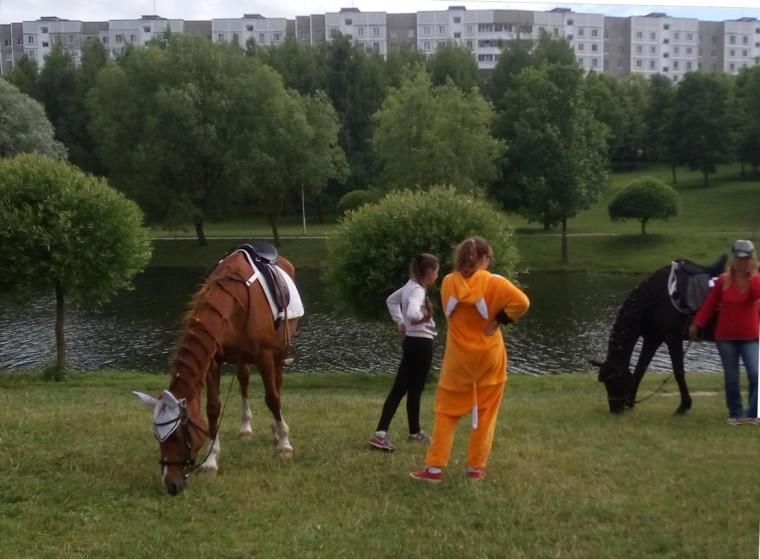 Катание на лошадке в  парке Павлова   г. Минск 3 июля 2017