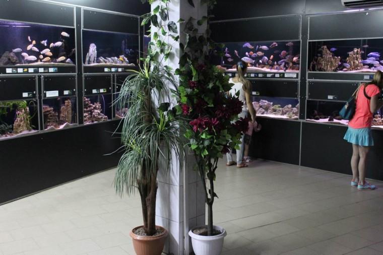 Здание  Аквариум   27 августа 2016 в Минском Зоопарке  г. Минск  улица Ташкентская  40