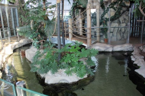 Ландшафт  в  Экзотариуме  в Минском Зоопарке  27 августа 2016   г. Минск  улица Ташкентская  40