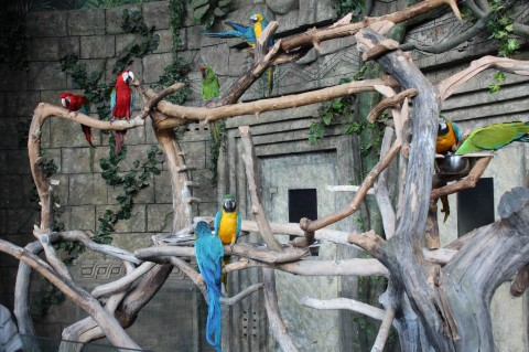 Попугаи  в  Экзотариуме  в Минском Зоопарке  27 августа 2016   г. Минск  улица Ташкентская  40