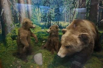 Выставка  Животные Беларуси