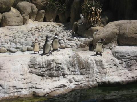 Пингвины в зоопарке  Parque Zoologico de Barcelona   BR г. Барселона  Испания
