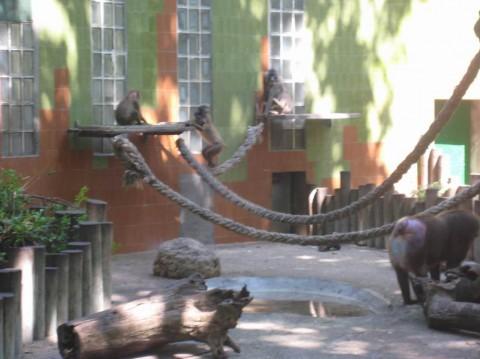 Обезьяны в зоопарке  Parque Zoologico de Barcelona   BR г. Барселона  Испания