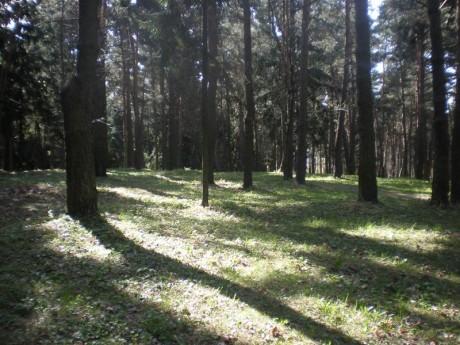 Парк 50-летия Октября  г. Минск  Беларусь