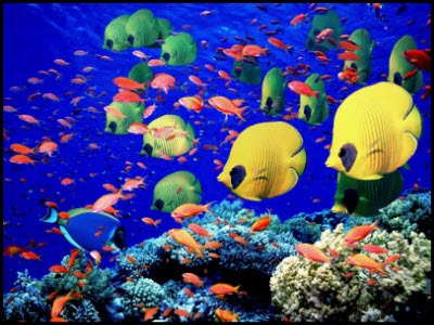 аквариум   BR  Минский зоопарк