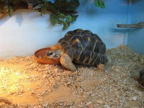 черепаха   BR  Минский зоопарк