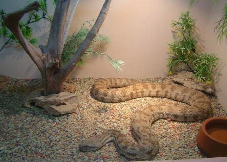 змея   BR  Минский зоопарк