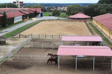 Содержание лошадей  Центр Конного Спорта Минский район  аг Ратомка