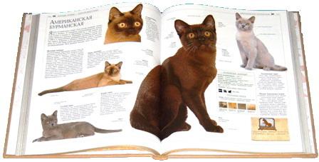 Книга о кошках  Ночная книжная ярмарка  выставка  г. Минск  Беларусь