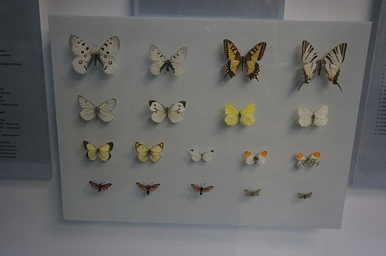 Бабочки  Музей природы и экологии  8 мая 2017  г. Минск  ул. Карла Маркса  12