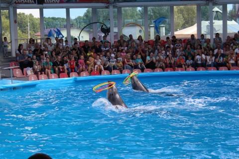 Дельфинарий  в Минском Зоопарке  27 августа 2016   г. Минск  улица Ташкентская  40