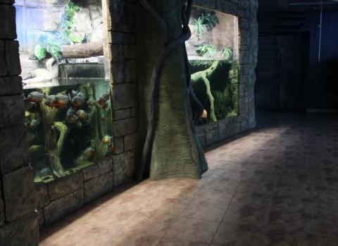Рыбы  в  Экзотариуме  в Минском Зоопарке  27 августа 2016   г. Минск  улица Ташкентская  40