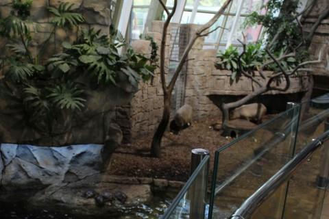 Свинки  в  Экзотариуме  в Минском Зоопарке  27 августа 2016   г. Минск  улица Ташкентская  40