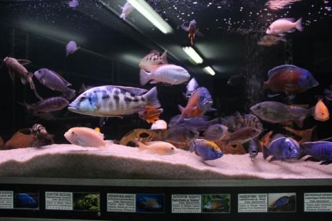 Рыбки  в здании   Аквариум   27 августа 2016 в Минском Зоопарке  г. Минск  улица Ташкентская  40