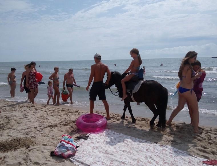 Пляж  море  лошадка  База отдыха  Рось   время 10:43 утро  13 июля 2017
